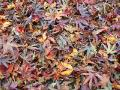 autumn_fallen_eaves_